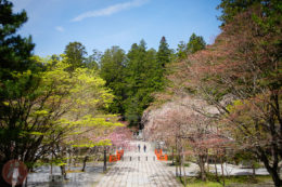 Osaka Guia de viaje Monte Koya Japon