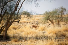 Jaisalmer Guia de viaje Desert National Park
