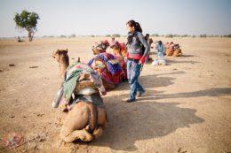 Jaisalmer Guia de Viaje Camellos