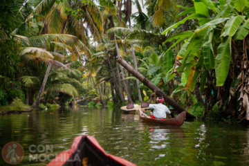 Great Backwaters