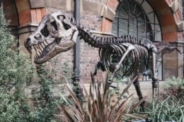 The Sedgwick museum of earth sciences