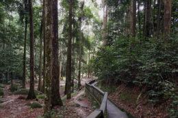 Guia de viaje Kuala Lumpur FRIM Forest Research Institute