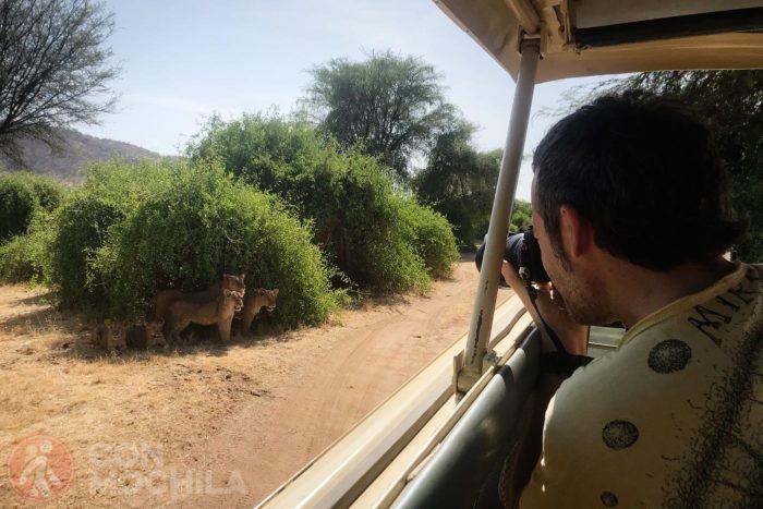 Fotografiando lenoes en Samburu