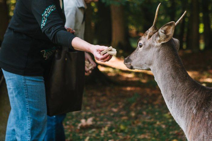 Dando de comer a un ciervo