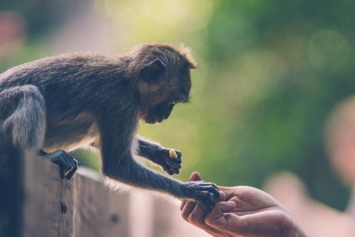 Contacto directo con un macaco