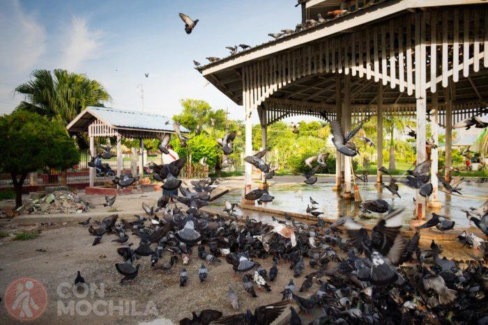 Las palomas a miles