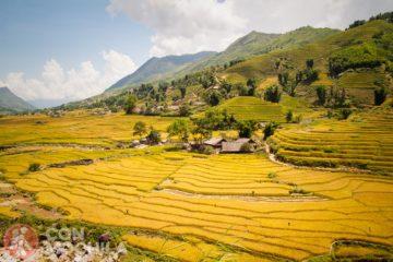 Terrazas y cultivos de arroz
