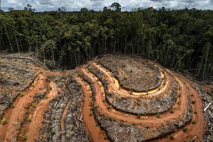 deforestación aceite de palma