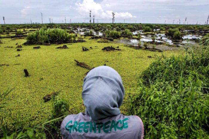 Greenpeace aceite de palma Malasia Indonesia