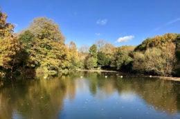 Hampstead Heath Highgate mixed pond