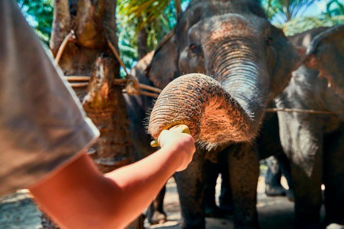Elefante en santuario