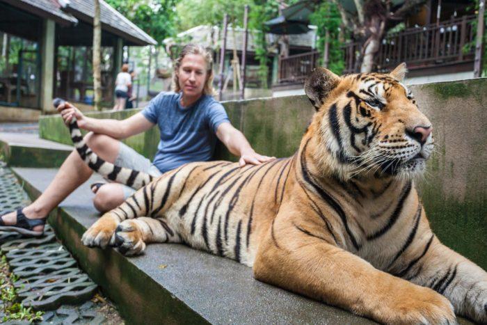 Otra imagen típica en los centros de tigres