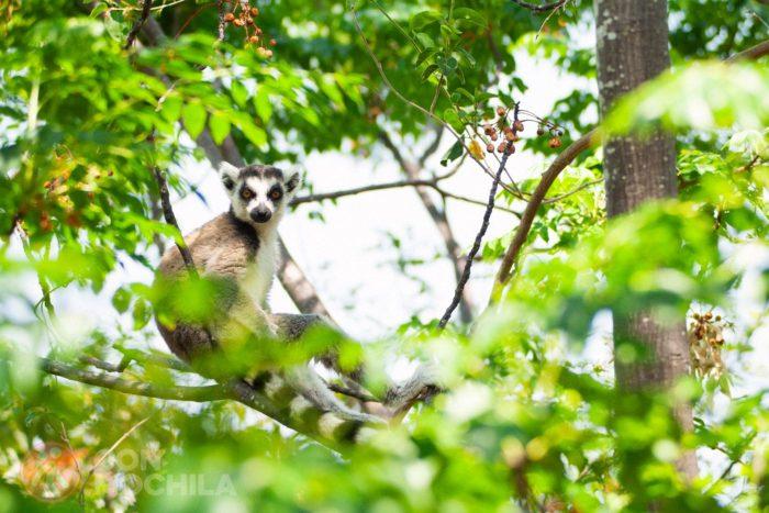 Bienvenidos a Madagascar