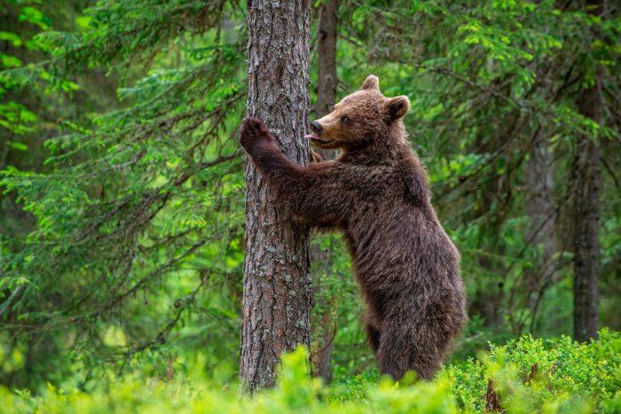 Uno de los osos