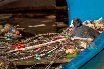Pájaro y pajitas de plástico