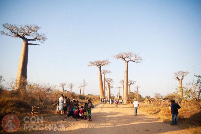 La avenida de los baobabs al atardecer