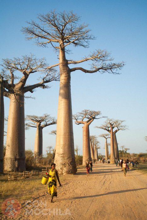 Atravesando el paseo de los baobabs