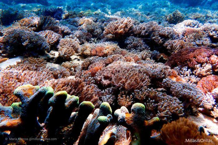 Infinidad de corales de distinta especie, formando bosques submarinos.