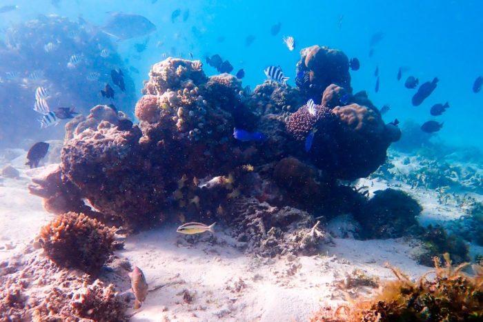 Alrededor de las estructuras de coral, siempre se encuentra gran cantidad de vida marina. Isla de Redang, Malaysia.