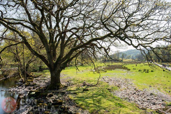 Lugar ideal para dar largos paseos en la natraleza