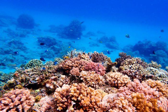 Arrecife de coral, en alguna de las isla entre Lombok y Komodo. Indonesia.