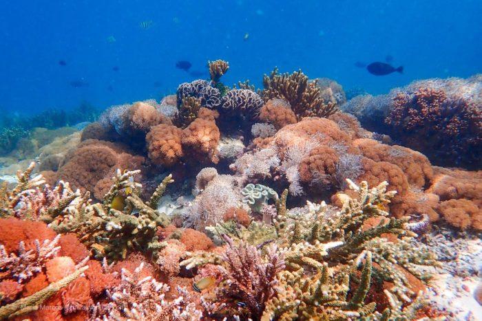 La competencia por el espacio en busca de la luz. En sólo una foto se pueden contabilizar más de 10 especies distintas de corales.
