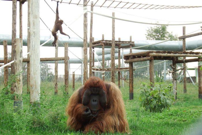 Boris observa tímido a los visitantes, durante una de las visitas guiadas