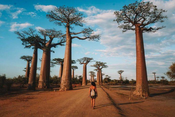 Avenida de los Baobabs. Morondava