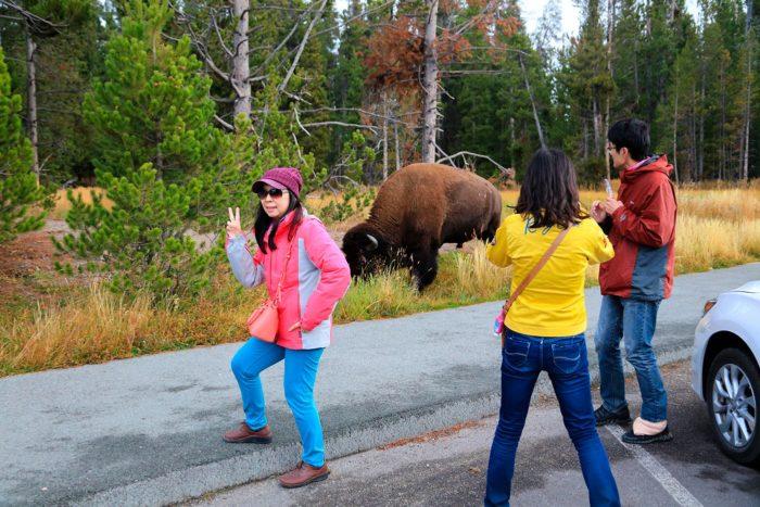 Selfie con bisonte