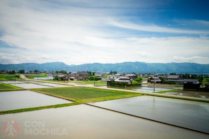 Y sus arrozales