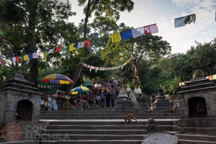 Los monos que encontrarás al llegar al templo de Swayambhunath