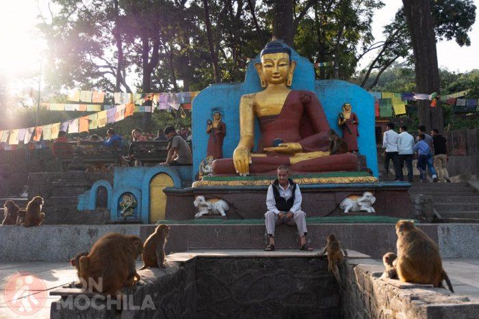 Monos ante una figura de Buda