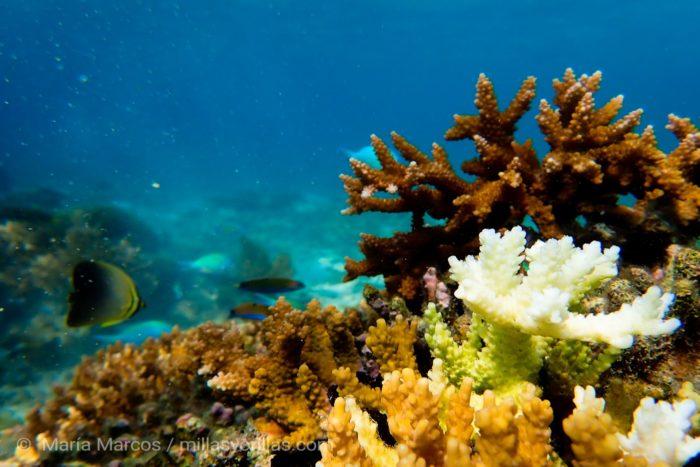 Cerca de la isla de Komodo en donde se ve como corales están empezando a blanquearse.