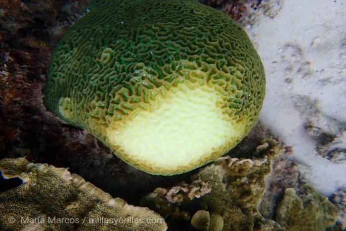 El blanqueamiento de los corales está transformando los paisajes submarinos.