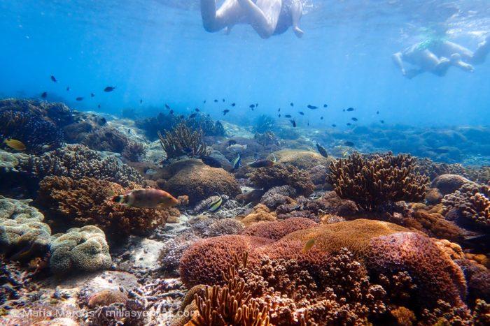 Dos turistas haciendo snorkel sobre la vida marina en una isla de Indonesia.