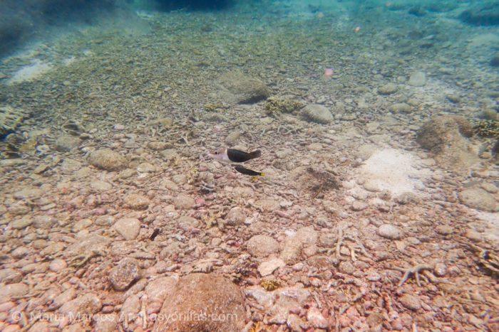 Fondo marino arrasado por las actividades de pesca destructiva en la isla de Tioman, Malaysia.