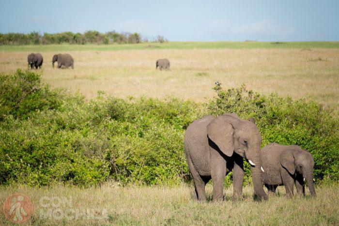 Elefantes en el Masai Mara