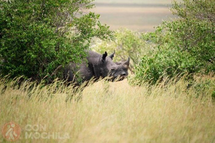 El tímido rinoceronte