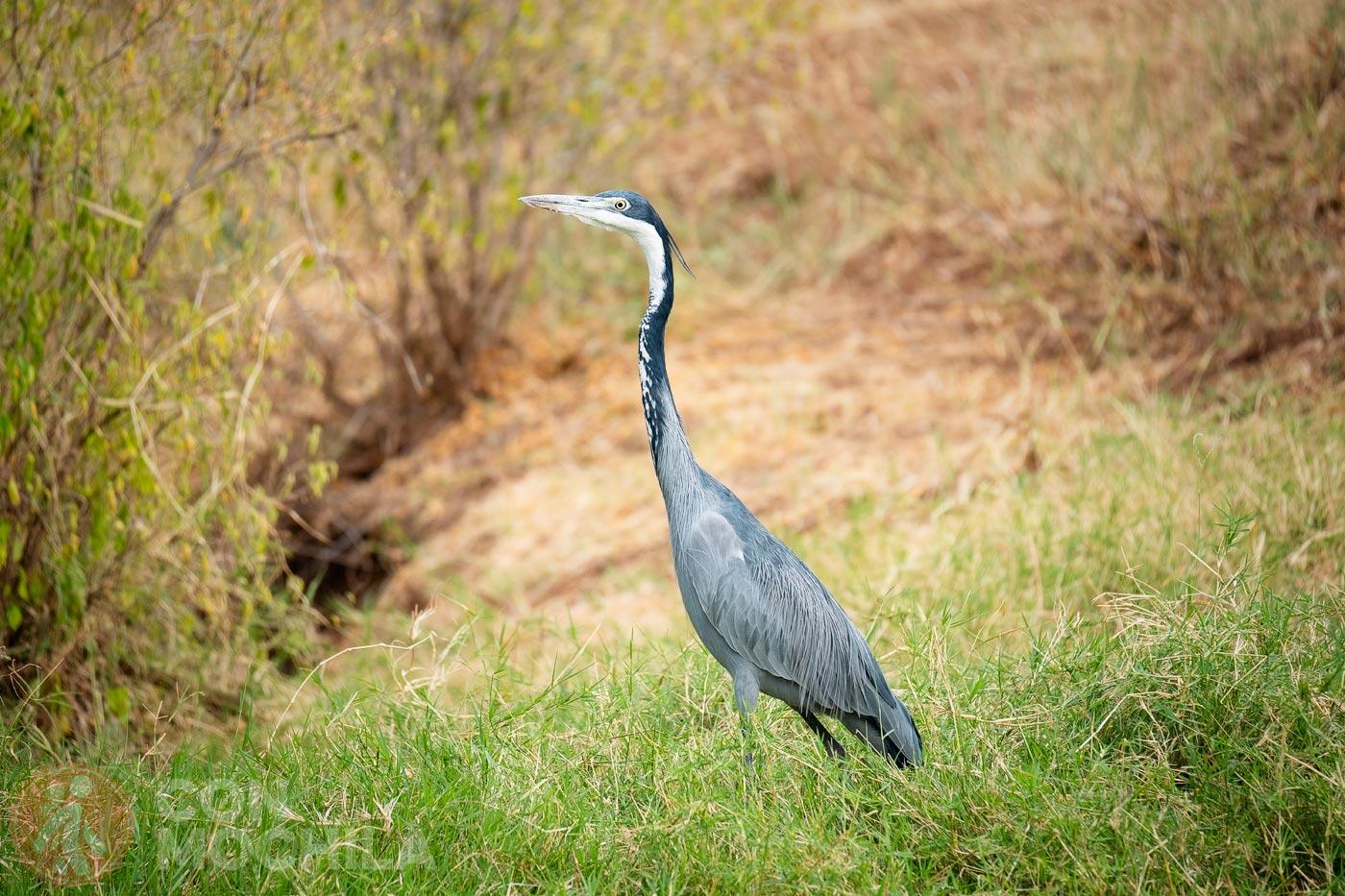 Y hasta aquí nuestro paseo por Samburu y Buffalo Springs
