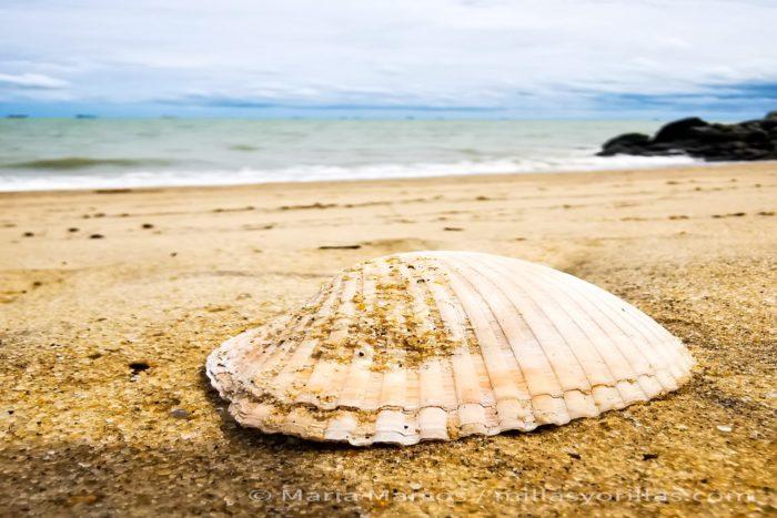 El carbonato cálcico forma parte de un ciclo natural en el ecosistema marino.