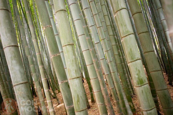 Bienvenidos al bosque de bambú