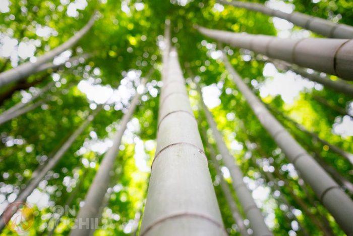 El bosque invita a la meditación, si no hay mucha gente