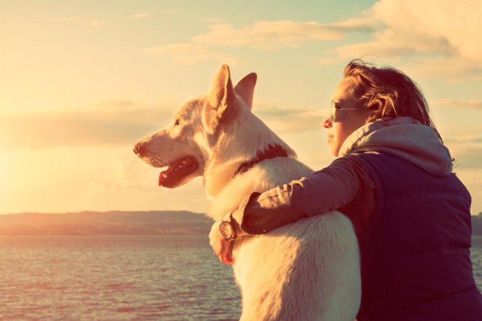 Relaciones entre humanos y perros