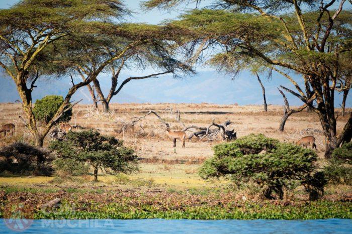 Bienvenidos al lago Naivasha