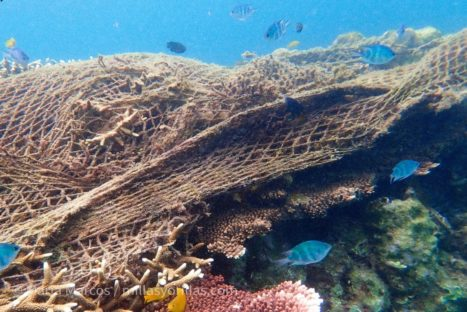 Las redes de pesca abandonadas, van atrapando a la fauna marina silenciosamente.