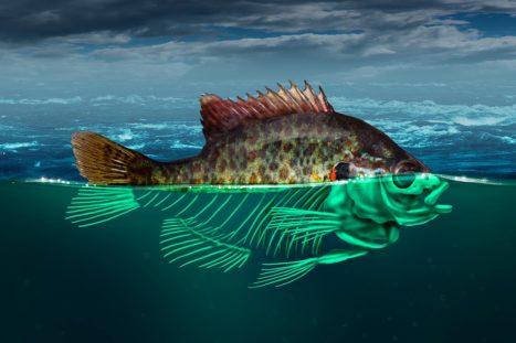 La acidificación de lso océanos